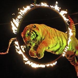 Цирки Афипского