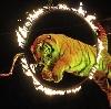 Цирки в Афипском