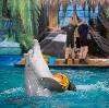 Дельфинарии, океанариумы в Афипском