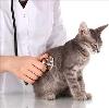Ветеринарные клиники в Афипском